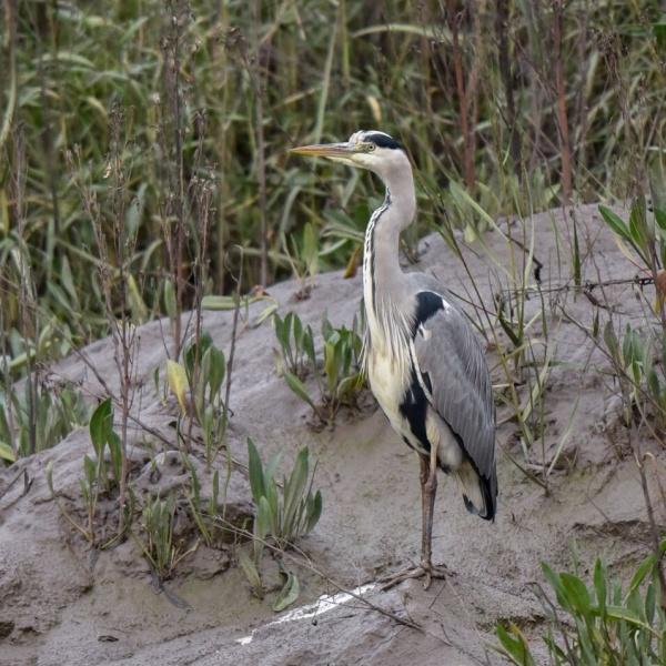 Early Birdsong Wildlife